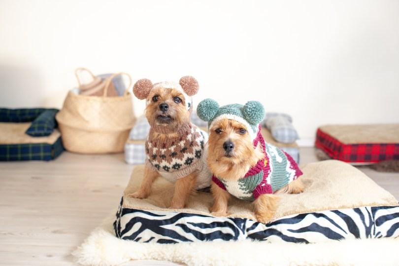 ノーフォークテリア 犬の洗える日本製ベッド:ロイヤルベッド - アンベルソ
