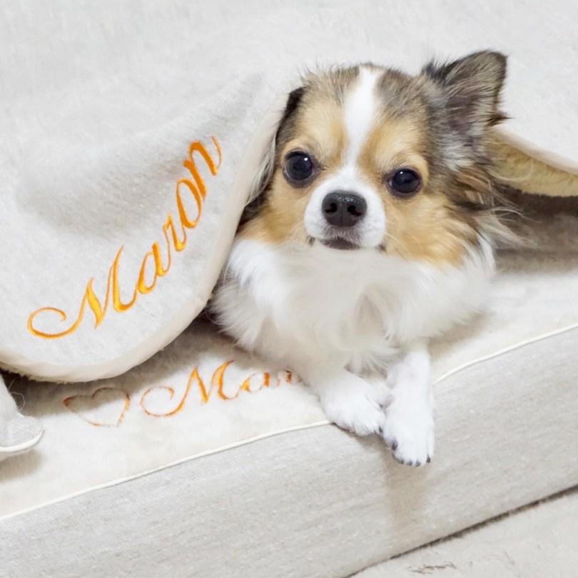 モグラー 犬の洗える日本製ベッド:ロイヤルベッド - アンベルソ