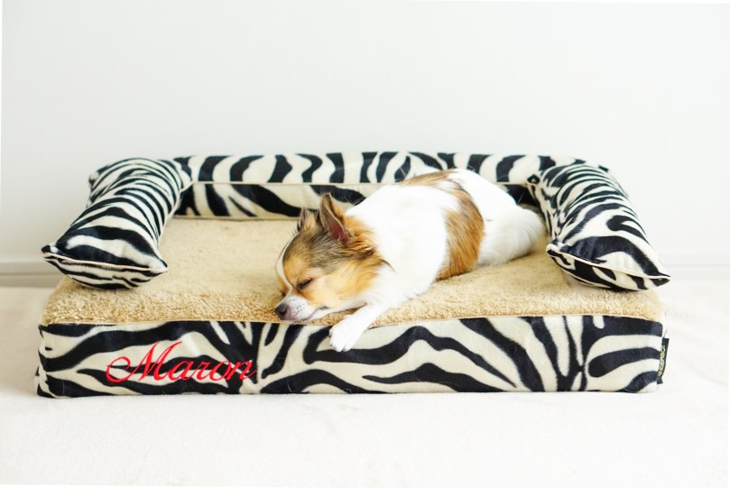 愛犬のベッド、ベストなサイズは? 犬の洗える日本製ベッド:ロイヤルベッド - アンベルソ