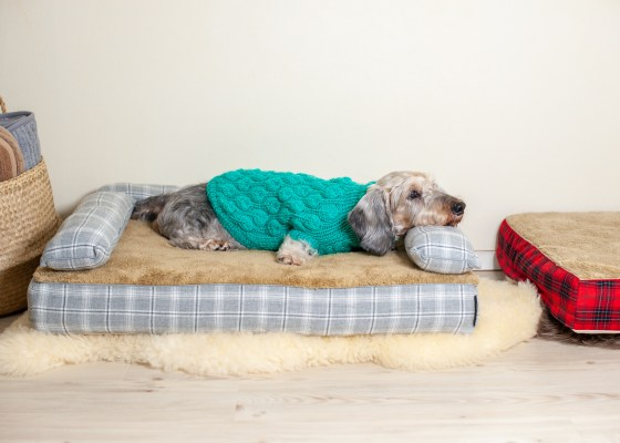 愛犬のベッド、ベストなサイズは?