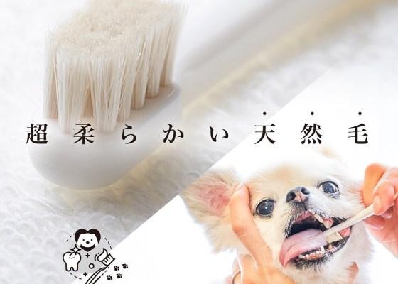 ミガケンデ:獣医師と共同開発された日本初の天然毛の歯ブラシ