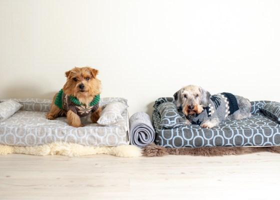 ベッドカバー:エルモ|犬のベッド:アンベルソ