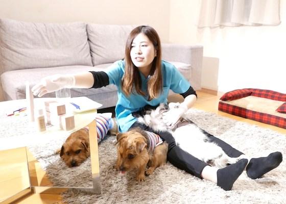 歯磨きの重要ポイント |犬のベッド:アンベルソ