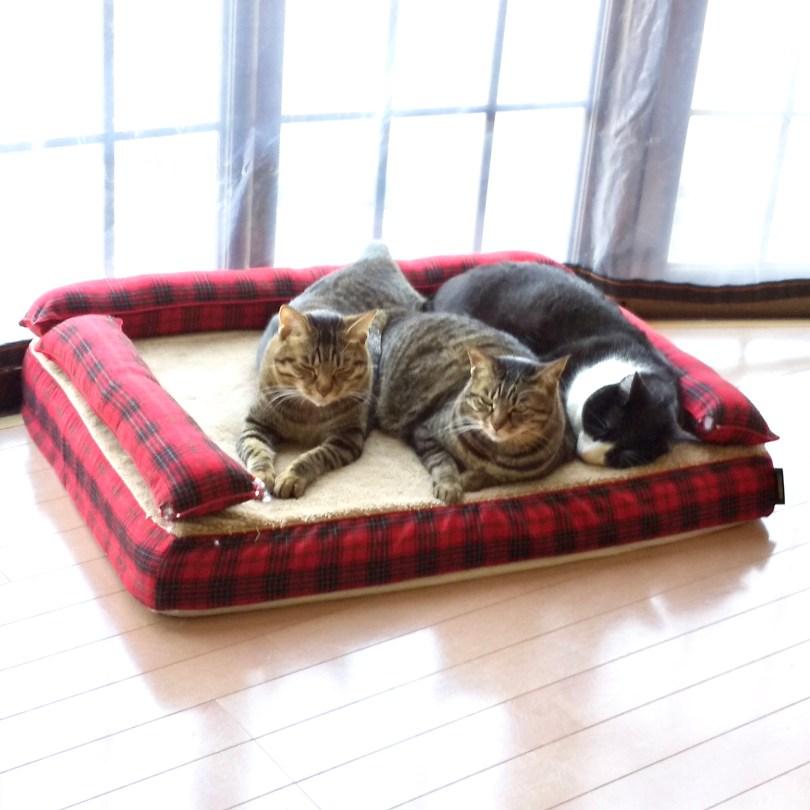 猫の家族|犬のベッド:アンベルソ