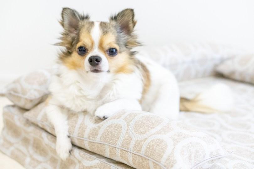 クッション付きベッドカバー:エルモ 犬のベッド:アンベルソ