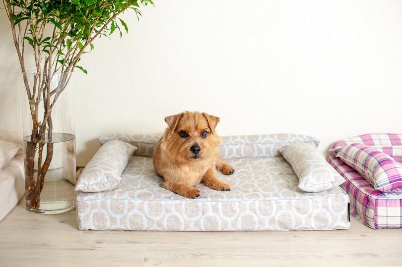 クッション付きベッドカバー:エトレ|犬のベッド:アンベルソ