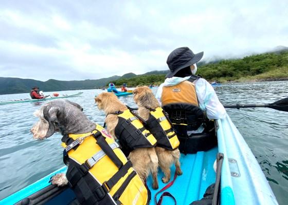 犬とカヤック at 本栖湖|犬のベッド:アンベルソ