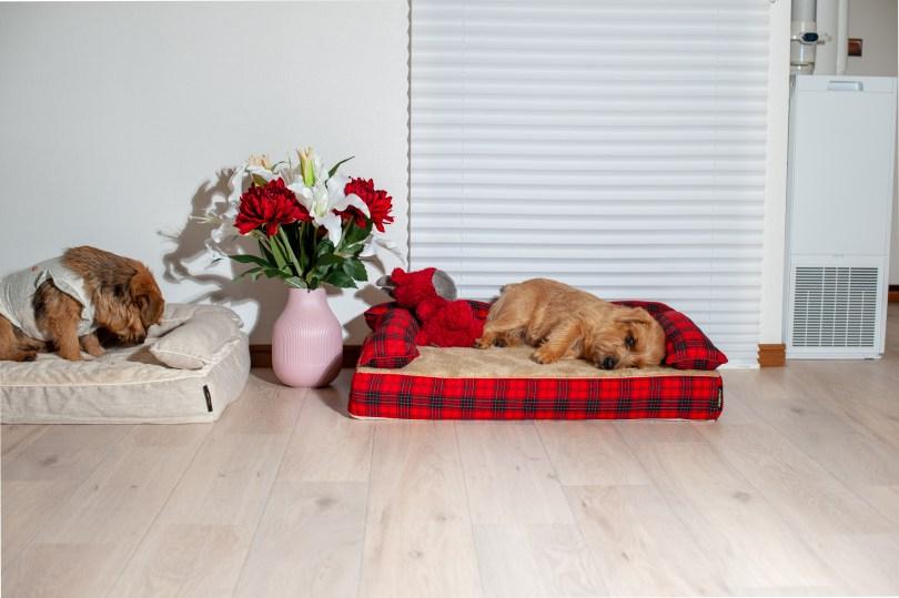 クッション付きベッドカバー:ビビアン|犬のベッド:アンベルソ