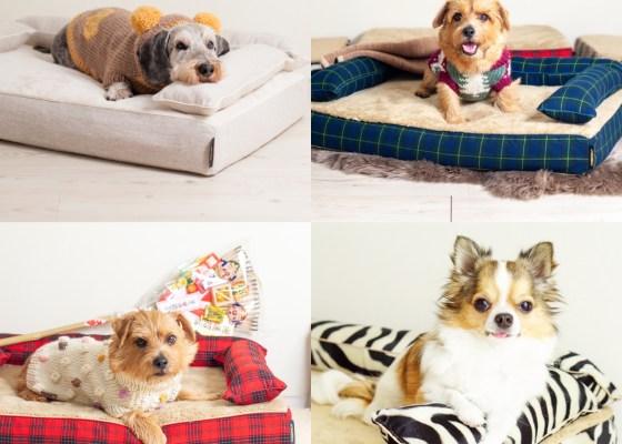 冬の定番商品|犬のベッド:アンベルソ