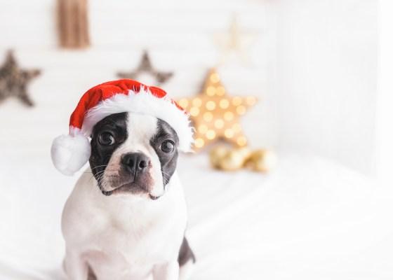 冬のイベントのご案内|犬のベッド:アンベルソ