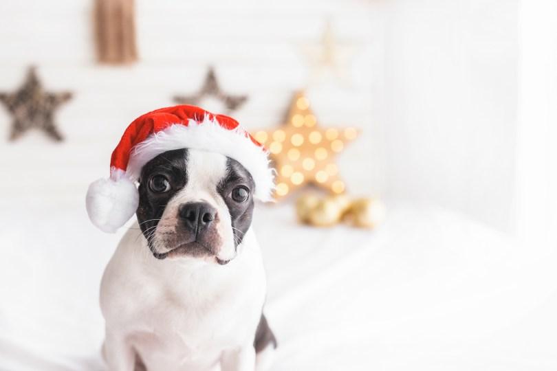 冬のイベントのご案内 犬のベッド:アンベルソ