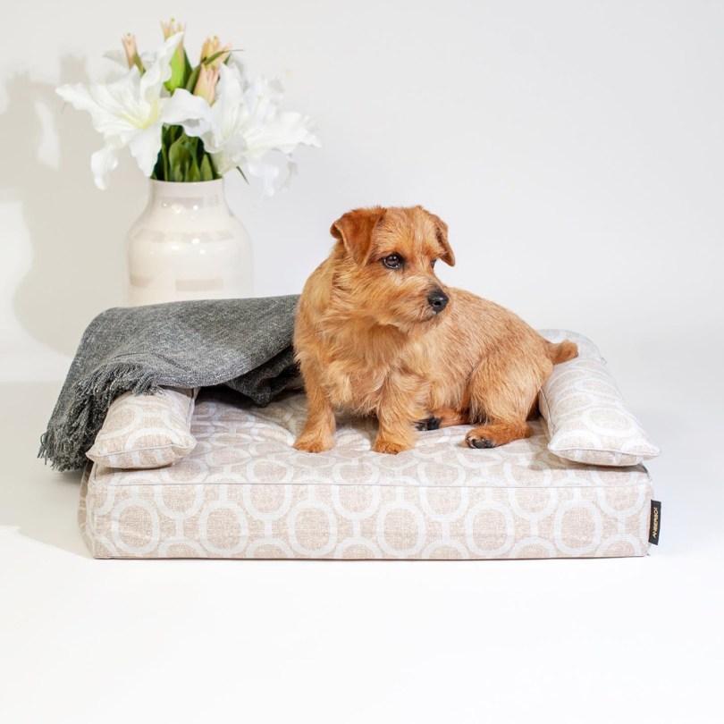 クッション付きベッドカバー:エルモ(アクアグレー) 犬のベッド:アンベルソ