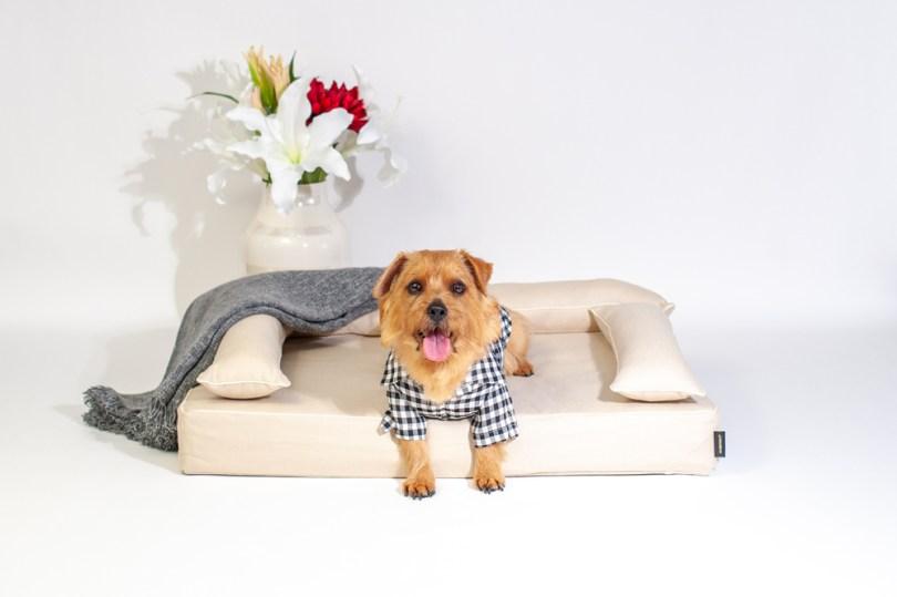 あご乗せクッション付きカバー:ファビア(グレージュ・プレイン) 犬のベッド:アンベルソ