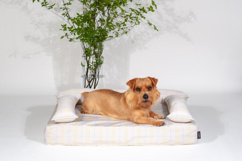あご乗せクッション付きカバー:チェルシー(ベージュ) 犬のベッド:アンベルソ