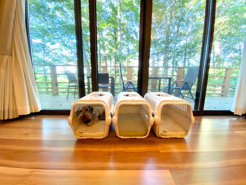 看板犬の夏休み at 軽井沢|犬のベッド:アンベルソ
