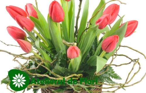 Flori pentru 8 martie 2013 lalele