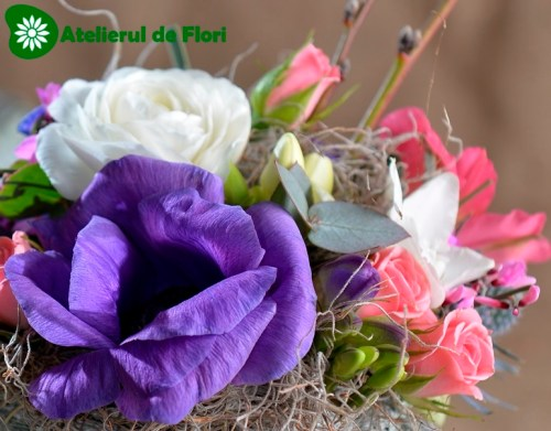 anemone mov