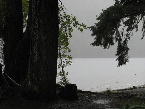 rainy woods