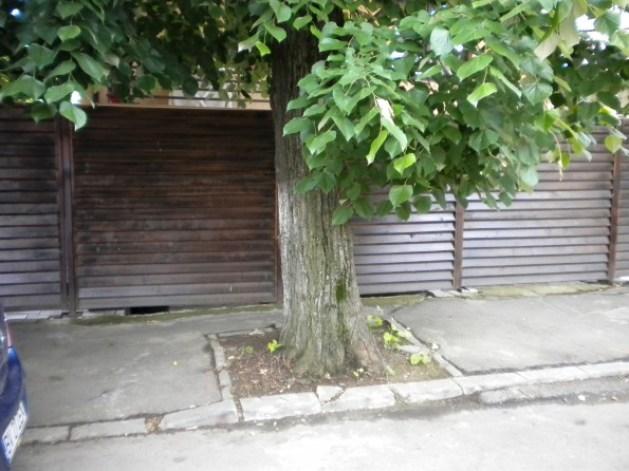 Pe locul unde ar fi trebuit sa fie calea de acces catre parcarea subterana si curtea interioara se afla un pom