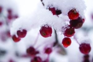 snow_hope-2