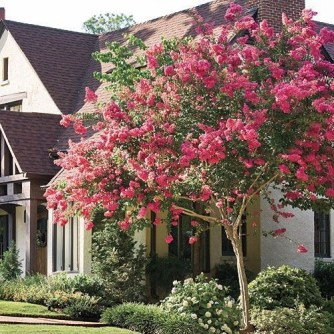 Simple But Beautiful Front Yard Landscaping Ideas 29