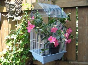 Awesome Gardening Ideas on Low Budget 32