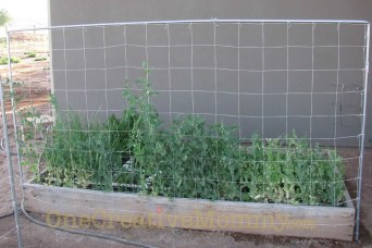 Cool DIY Garden Trellis Ideas 05