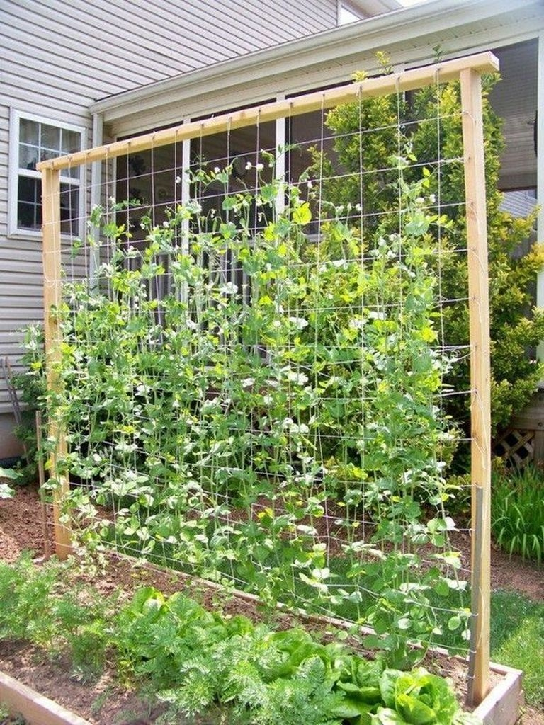 Cool DIY Garden Trellis Ideas 52