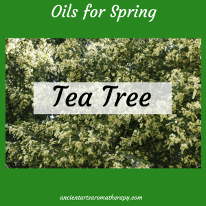 Tea Tree for Spring