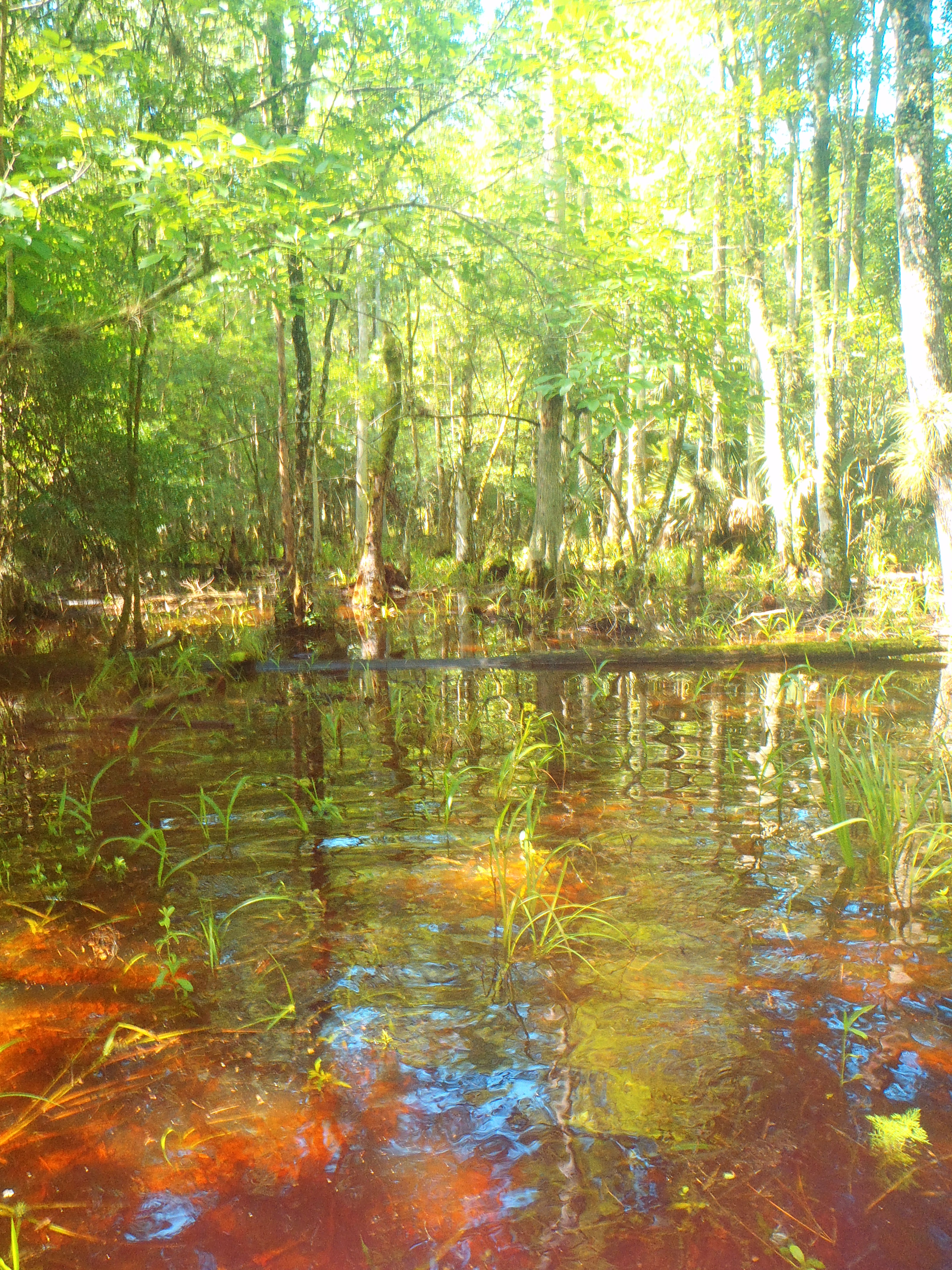 a Whole New Beauty Navigating the Gorgeous Green Swamp