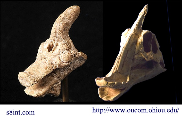 "Sumerian stone head of a ""mythical"" creature… or a Saurolophus?"