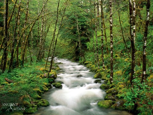 mountain_river_trees_wood_green_white_stream_15250_1600x1200-copy