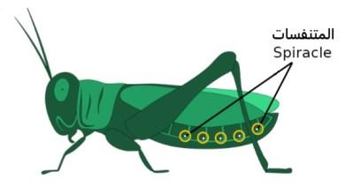 تتنفس الحشرات عن طريق ، كيف تتنفس الحشرات المائية مع الخياشيم