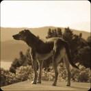May &c.: tiki touring New Zealand with my dog Tuhi.