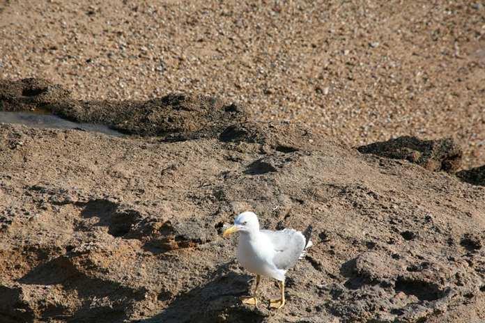 Fauna en La Caleta