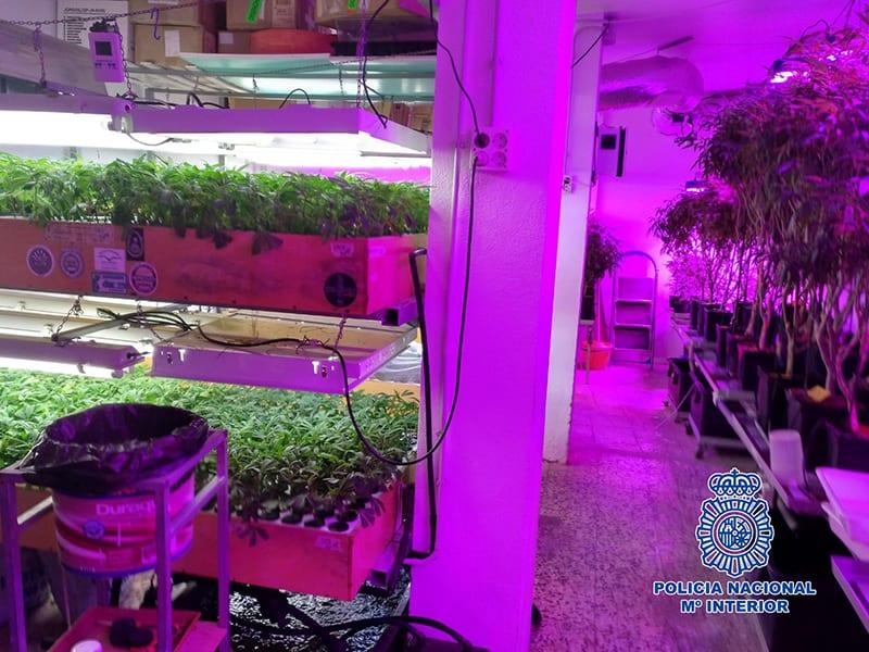 plantacion indoor