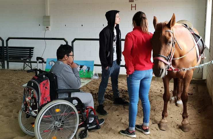 El caballo educa