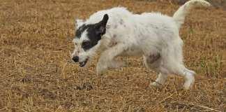 Refugio provincial de animales Huelva