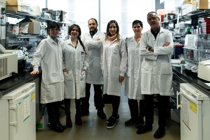 Descubren una nueva diana terapéutica para frenar la aterosclerosis precoz