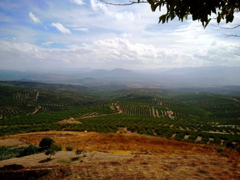 Il panorama del mare di ulivi che si apprezza dal mirador di Ubeda.