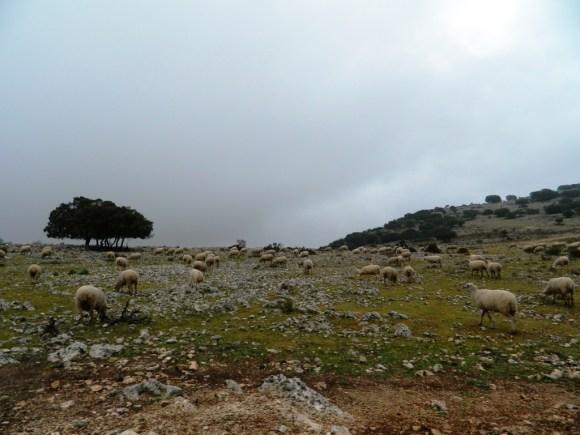 zuheros_cordoba_andalusia_consigli_tour_viaggi_sierra