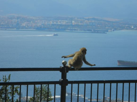 cosa_vedere_gibilterra_scimmietta