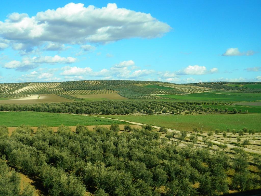 Paesaggio Olivicolo Italiano