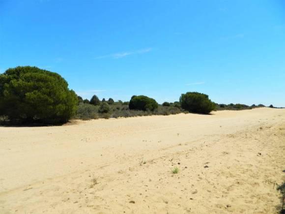 spiagge_siviglia_Matalascañas