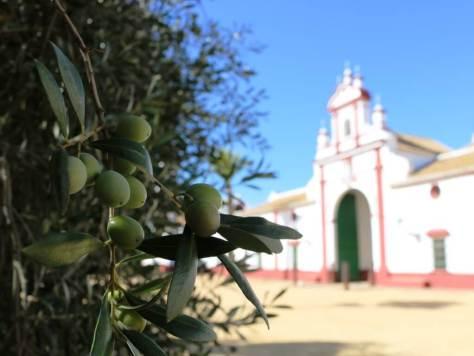 olio_turismo_siviglia_hacienda_olivoteca