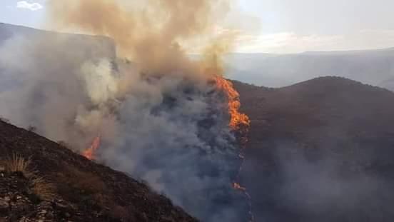 Incendio afecta más de 50 hectáreas en Pajchani, se desplegó a pagar las llamas varios policías