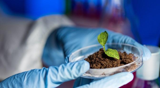 Hoy, la Justicia debe dirimir si Bolivia avanza o no en el uso de biotecnología agrícola
