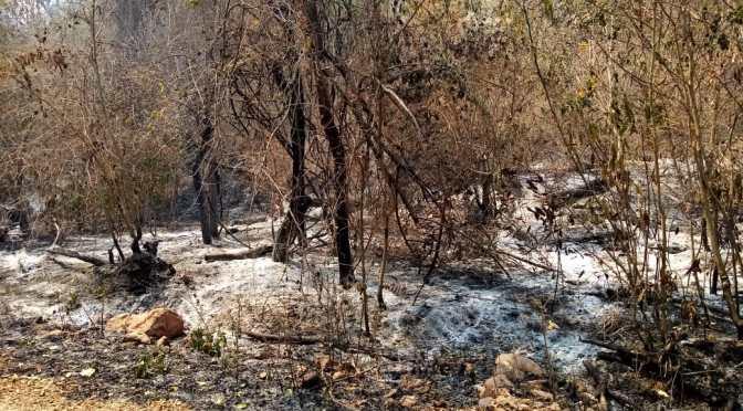 Fuego: Hace seis días el sur de Bolivia se incendia