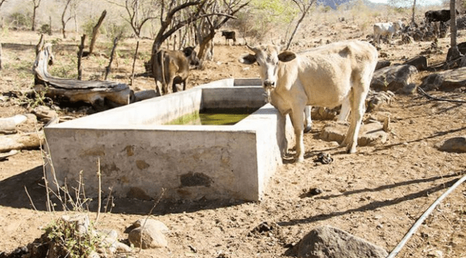 La sequía está provocando varios problemas a comunarios en el Chaco tarijeño y O´connor