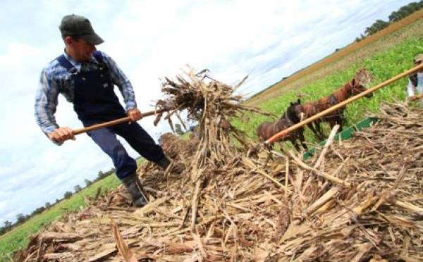 """Cardozo denuncia que menonitas deforestan el Chaco: """"¿Quiénes les autoriza?"""""""
